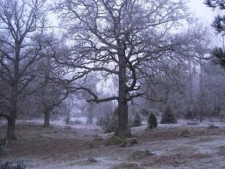 Frostekhagenlitenbild